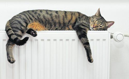 Nach dem Entlüften sollte der Heizkörper wieder richtig warm werden.Foto: Shutterstock
