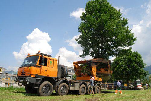 2009 wurden die Bäume schonend ausgegraben und für das Umpflanzen vorbereitet.