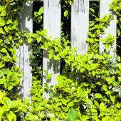 Nachbars Bäume und Pflanzen
