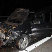Acht Wildschweine auf Autobahn getötet