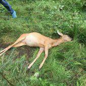 Rätsel um getötetes Wild