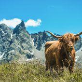 Hoja – nichts als das Leben auf der Alpe