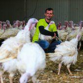 Ein Jahr nach Vogelgrippe-Schock sind am Flatz-Hof wieder glückliche Puten A6