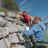 Steinmauer ist nun bienenfreundlich