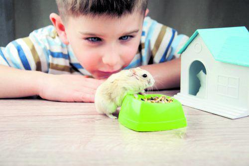 """Kleintiere wie z. B. Hamster gelten als """"wohnungsübliche"""" Tiere.foto: Shutterstock"""