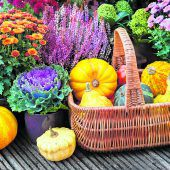 Den Herbst farbenfroh angehen