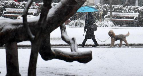 Die geschlossene Schneedecke bedeckte fast ganz Österreich. Dies kommt im November statistisch gesehen nur etwa alle fünf Jahre vor. APA