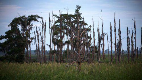 """""""Geisterwälder"""" breiten sich aus: Hunderttausende Hektar Wald sind bereits abgestorben. AP"""
