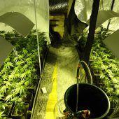 Polizei stellt 113 Cannabispflanzen sicher