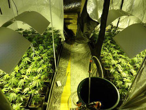 Der Hohenemser hatte in seinem Zweitwohnsitz eine Cannabis-Indoorplantage betrieben, die beim Eintreffen der Polizei abgeerntet war. SYMBOL/POLIZEI