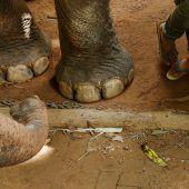 Mutterschutz für Arbeitselefanten in Laos