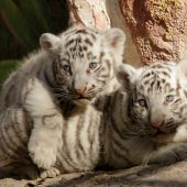 Knuddelige Zwillinge