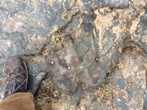 Der 115 Millionen Jahre alte Abdruck wurde mit einem Hammer beschädigt. AFP