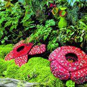 Kerinci-Seblat-Nationalpark