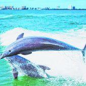 Mit den Tümmlern im Golf von Mexiko