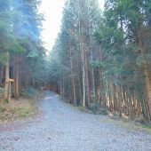 Eschensterben im Auwald von Weiler vorerst unter Kontrolle