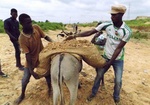 China hat bereits an der Bedrohung von Elefanten und Nashörnern einen großen Anteil. Nun könnte die Nachfrage nach Eselshäuten Arbeiter in Nigeria um ihre Arbeitstiere bringen. APA