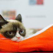 Grumpy Cat gewinnt Prozess