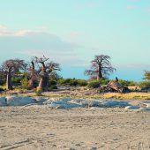 Salzpfannen und Baobabs
