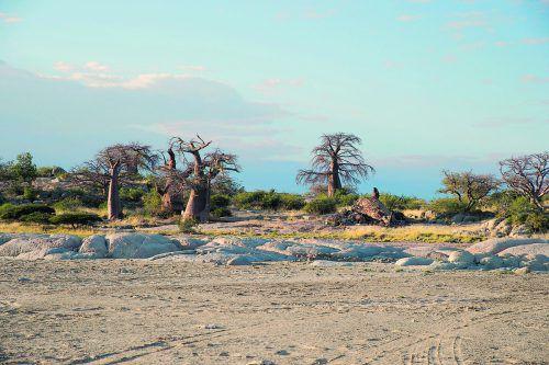"""Die Erhebung inmitten der Salzpfannen nennt sich """"Kubu Island""""."""
