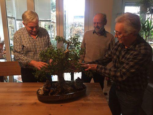 Durch liebevolle Pflege bekommt der Bonsai-Ficus sein besonderes Aussehen.Haller