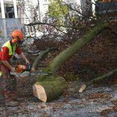 Grüne gegen weitere Baumfällungen