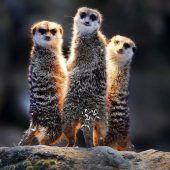 Lustiges Trio