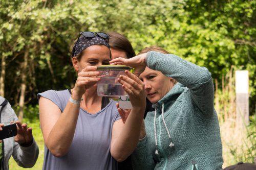 Naturführer lernen in vier Modulen viel über die Natur und darüber hinaus auch, wie man sein Wissen an andere vermittelt. inatura