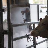 Es geht wieder los – TBC-Verdacht in fünf Rinderställen