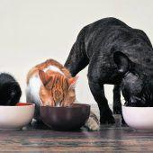 Wohnen mit Hund, Katz�und Co