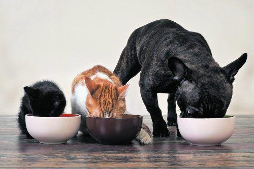 Wohnungsübliche Haustiere dürfen gehalten werden.foto: shutterstock