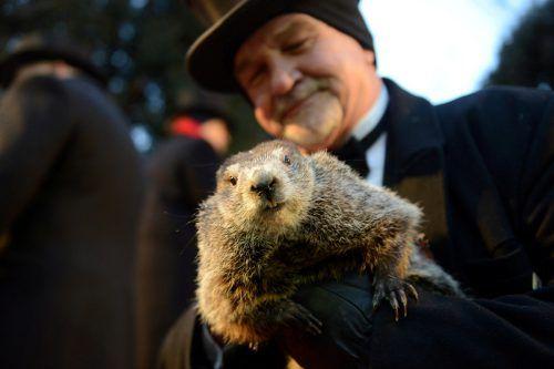 Das Murmeltier Phil prophezeit einen langen Winter. Reuters