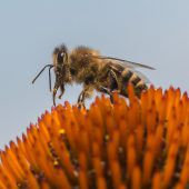 Kampf dem Insektensterben
