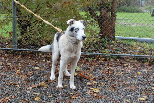 Die Hunde Luca (l.) und Diego (m.) sowie Kater Flocke haben keine Lust mehr, im Tierheim zu wohnen.
