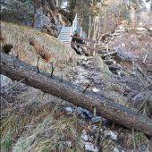 Heimische Forstwirtschaft vor Herausforderungen