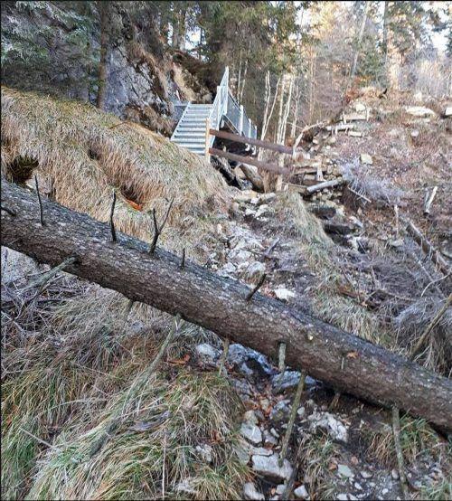Auch Windwürfe haben in den letzten Jahren den heimischen Wald wiederholt bedroht. Die Forstwirtschaft ist gefordert.VN/Reiner
