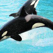 Sprachtraining für Orca Wikie. D8