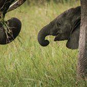Babyelefant auf Tour