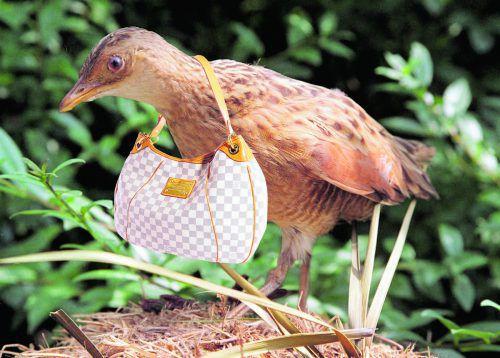Ein Vogel mit Geschmack: Der Wachtelkönig vom Seestadt-Areal trägt LV. Es steht ihm gut.Vauänn