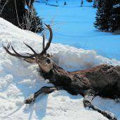 Tote Hirsche sorgen für Empörung. A4