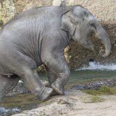 Elefantöser Festtag