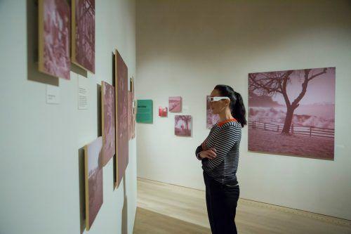 Kuratorin Kathrin Dünser begutachtet die 3D-Bilder Bertolinis. Besonders die Entwicklung dieser Kunstwerke war um 1930 sehr kostspielig. VN/Paulitsch