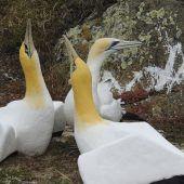 Neuseeland trauert um den einsamsten Vogel der Welt