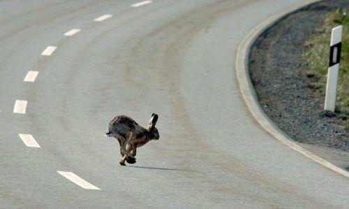 Der Erreger soll mindestens 40 Prozent der Kaninchen-Population töten. APA