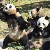 Milliardenhilfe für Pandas
