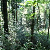 Gebündelte Kräfte im Forstdienst