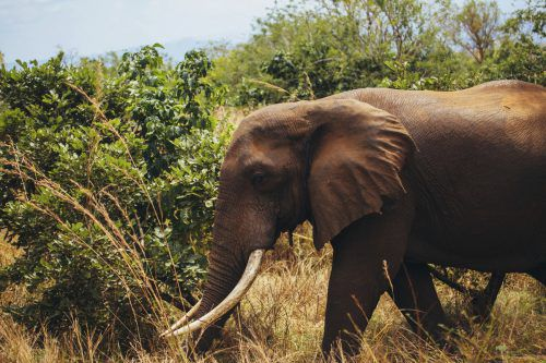 Selous gilt als eines der letzten großen und ungestörten Wildnisgebiete Afrikas. AP