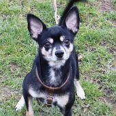 Fundhund Otto sucht seinen Besitzer