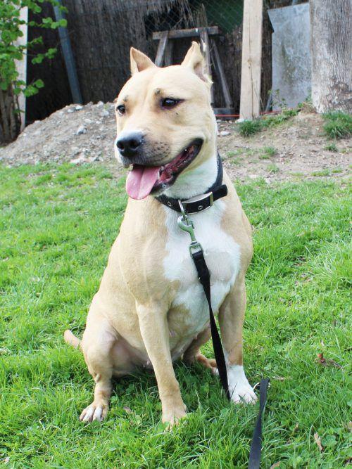 Kira, Cermei und Junior möchten am liebsten auf der Stelle zu liebevollen Menschen ziehen, die Erfahrung mit Hunden haben.