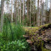 Polens Urwald in Gefahr